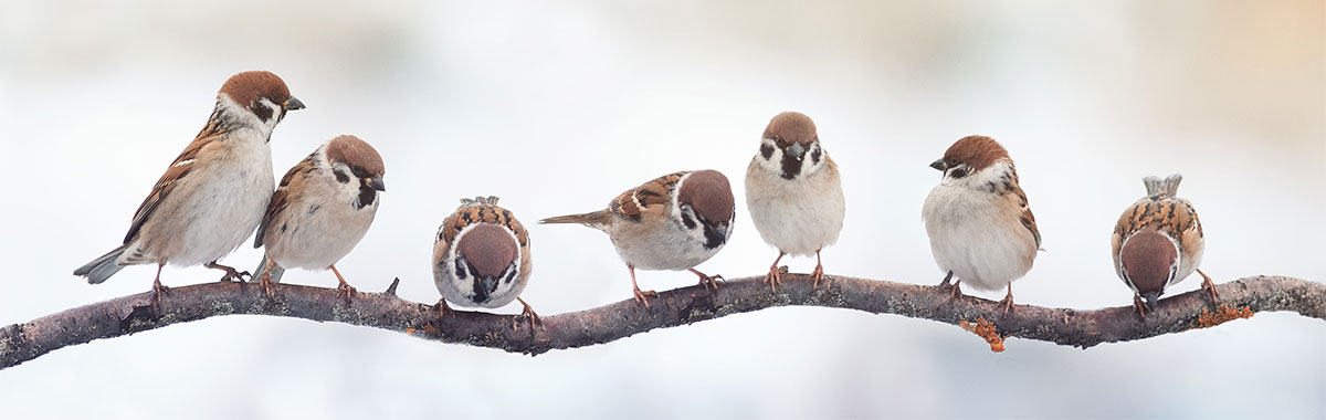Remember to feed our winter birds